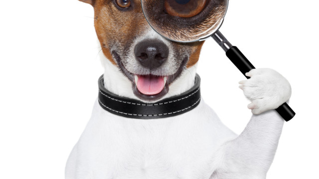 Sherlock Holmes Doggie