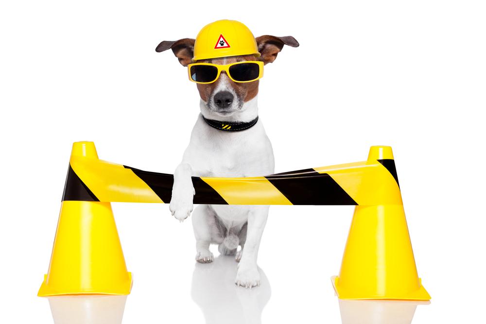 teamster doggie